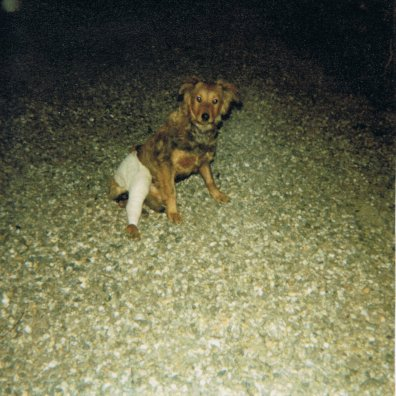 Mon chien Voyou, mes bébés à plumes et compagnie E-et-cie-vouyou-07-2b609d1