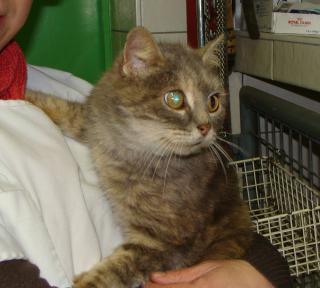 Sansa chatte âgée en cage en cabinet véto - dpt 56/35 Dsc03413-305f42f
