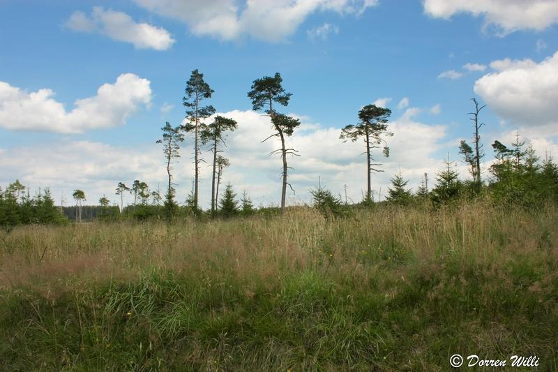 Ballade dans les Hautes fagnes et les sous-bois le 10-08-2011 Img_2746-800x600--2bbd991