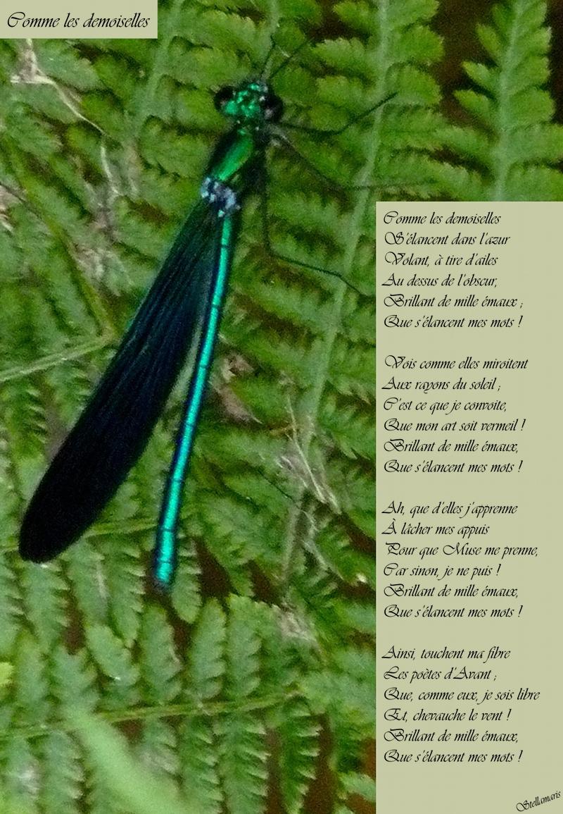 Comme les demoiselles / / Comme les demoiselles / S'élancent dans l'azur / Volant, à tire d'ailes / Au dessus de l'obscur, / Brillant de mille émaux ; / Que s'élancent mes mots ! / / Vois comme elles miroitent / Aux rayons du soleil ; / C'est ce que je convoite, / Que mon art soit vermeil ! / Brillant de mille émaux, / Que s'élancent mes mots ! / / Ah, que d'elles j'apprenne / À lâcher mes appuis / Pour que Muse me prenne, / Car sinon, je ne puis ! / Brillant de mille émaux, / Que s'élancent mes mots ! / / Ainsi, touchent ma fibre / Les poètes d'Avant ; / Que, comme eux, je sois libre / Et, chevauche le vent ! / Brillant de mille émaux, / Que s'élancent mes mots ! / / Stellamaris