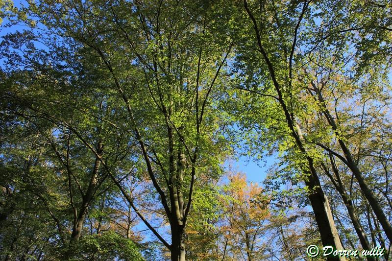 promenade sur les fagnes et alentours ( jalhay ) le 16-oct-2011 Dpp_jalhay---16-o...1---0005-2dd6be0