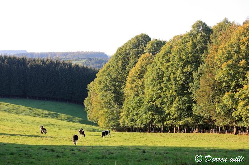 promenade sur les fagnes et alentours ( jalhay ) le 16-oct-2011 Dpp_jalhay---16-o...1---0039-2dd7146